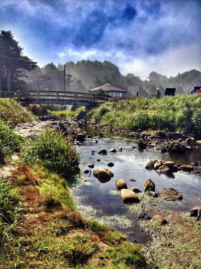 Beach Fog Creek