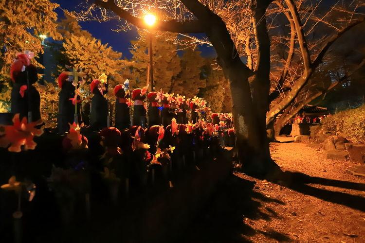 Japan Photography Tadaa Community Hello World Canonphotography Canon_photos EOS6DMarkII Jizo Night Illuminated Tree