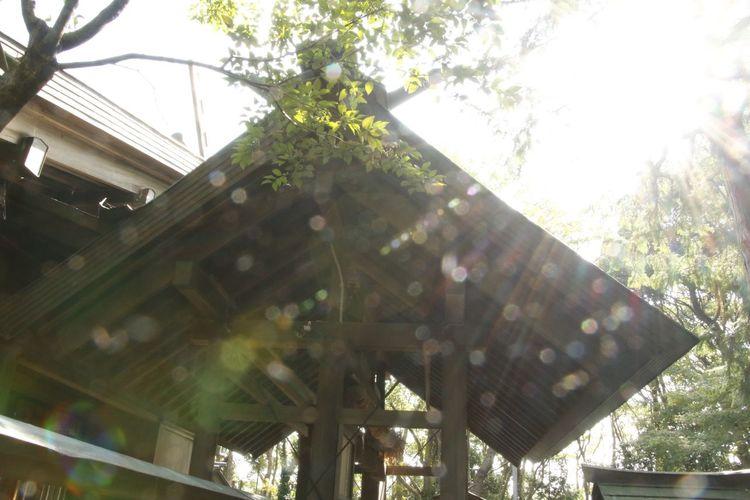 キラキラ 菊理媛命 伊弉冊 伊奘諾 Beautiful ヒーリング 神社 Temple キラキラ オーブ おのころ島神社 兵庫県 Tree Low Angle View Plant Day Nature Built Structure Architecture Sky No People Sunlight Sunbeam