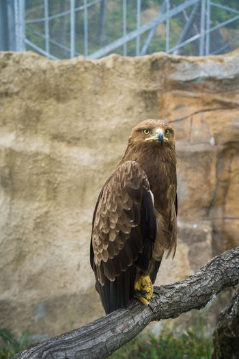Close-up of eagle perching on wooden post in zoo