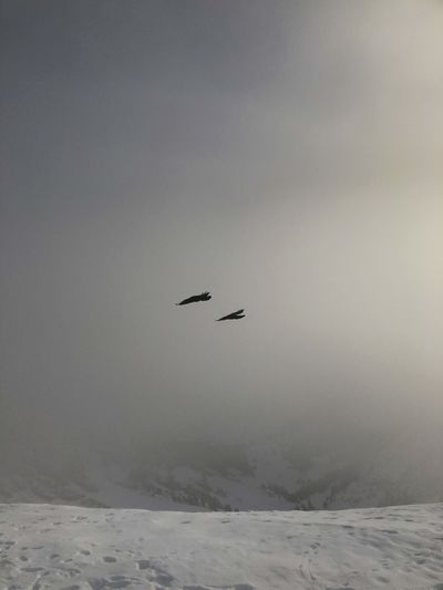 Bird flying over snow covered landscape