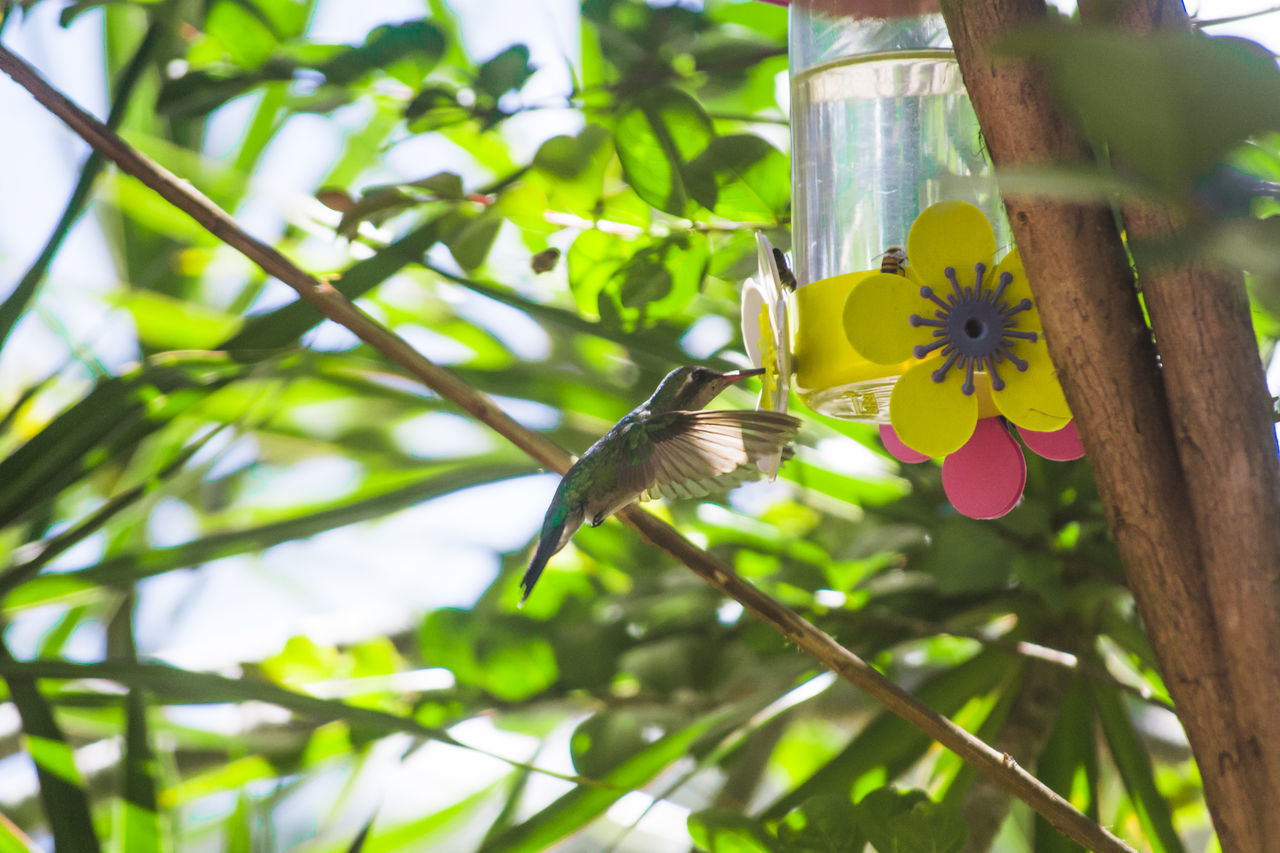 Low Angle View Of Bird Feeding On Feeder