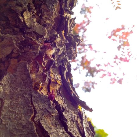 Which do you prefer? Color or B/W? Insect Ladybug Tree Nature Tree Trunk Textured  No People Day Outdoors Beauty In Nature Close-up Sky