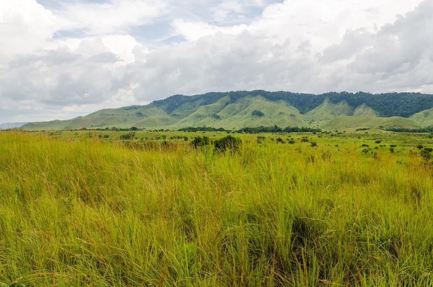 Landscape Africa Congolese Congo Brazzaville Congo
