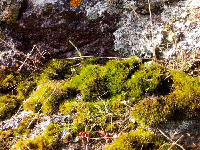 Moss at tbe