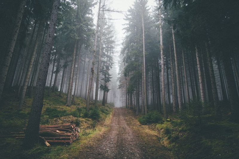 Mystic Forest Erzgebirge Winter Exploring EyeEm Best Shots Vscocam Nature Mountains Landscape Outdoors Explore Power In Nature Roadtrip Travel Rural Fog Moody Sky The Great Outdoors - 2016 EyeEm Awards