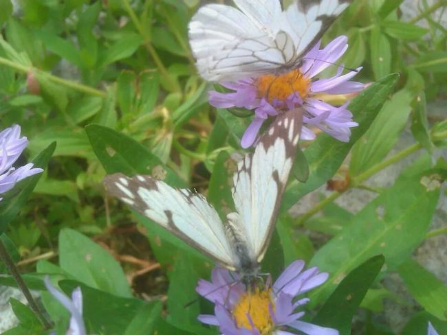 Flower & Butterfly Wilderness Small Town Feel Natural Beauty