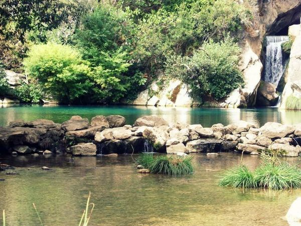 Tree Water Plant Rock - Object Tranquility Tranquil Scene Nature Stone - Object Green Color Beauty In Nature River Rock Day Flowing Water Non-urban Scene Andalucía Nature Exterior Andalucia, Spain Andalucía No People Outdoors