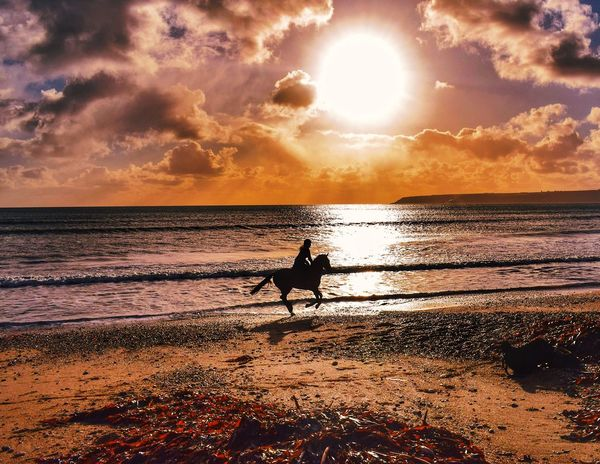 Horse Riding At The Beach Horse Riding Horse Sea Sunset Beach Horizon Over Water Water Sun Nature Silhouette Beauty In Nature