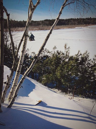 Winter In New England Winter Snow ❄ Outdoors Duxbury, Ma Winter Wonderland Landscape Cranberry Bog Birch Trees Tranquil Scene Landscapes With WhiteWall Landscape_photography
