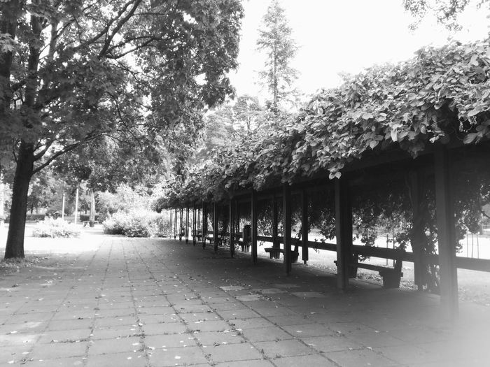 Tree Outdoors Day Nature No People Branch Tiles Park Pergola Cityscape Blackandwhite Benches Wooden Structure