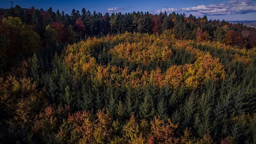 Beautifully Organized Flying High The Secret Spaces The Great Outdoors - 2017 EyeEm Awards Perspectives On Nature 10 Autumn Mood