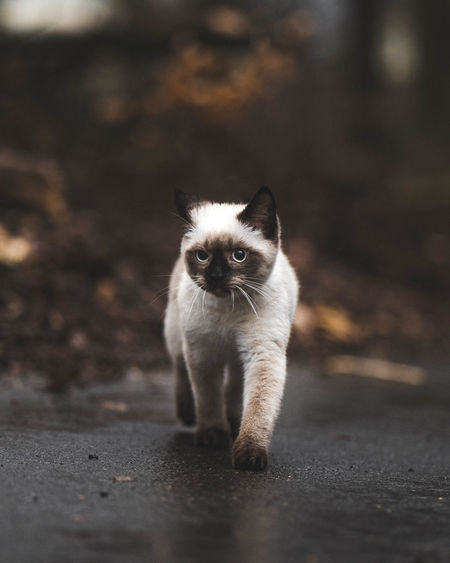 Portrait of cat standing on road
