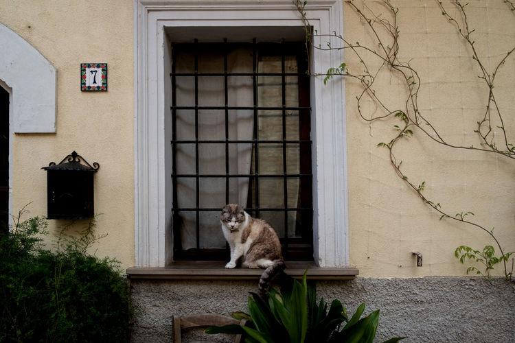 Cat In Front Of Closed Door