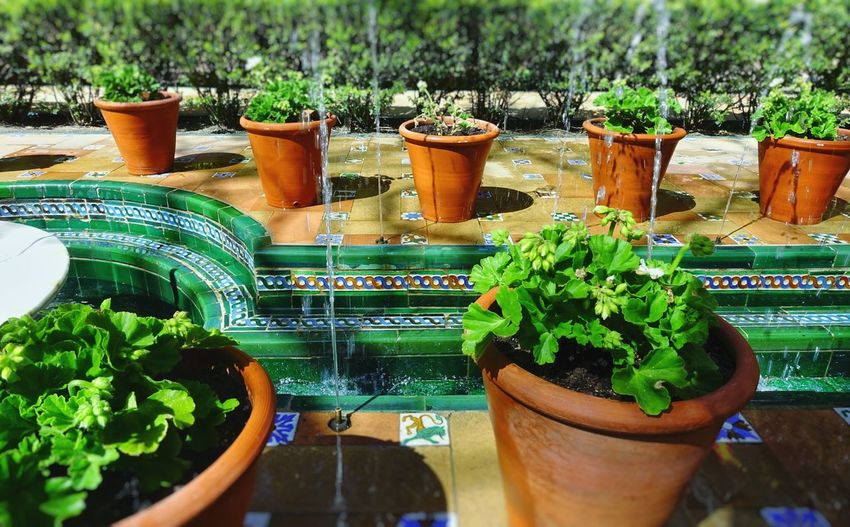 SPAIN Madrid Madrid Spain Courtyard  Terracotta Pot Potted Plant Pond Fountain Ceramic Tiles Ceramic Art Sorolla Freshness Bright Colors Springtime Tourism Green Nature Garden Architecture Greenhouse Water Potted Plant Leaf Close-up Plant Green Color Flower Pot Florist Houseplant Planting Gardening