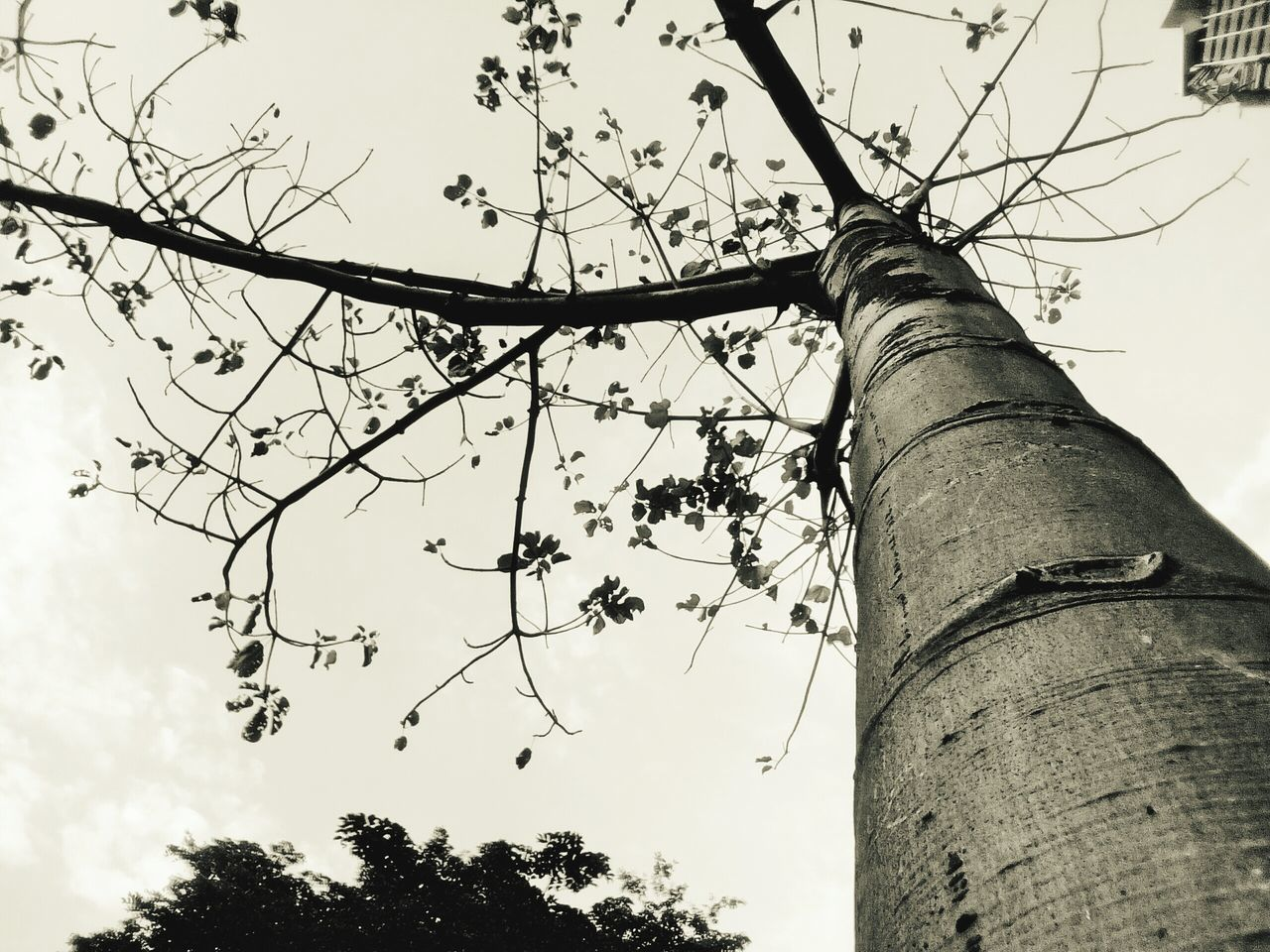 low angle view, sky, tree, built structure, outdoors, day, architecture, branch, no people, building exterior, nature