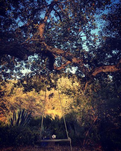 California Dreaming The Foohills Of Sierra Nevada Swing