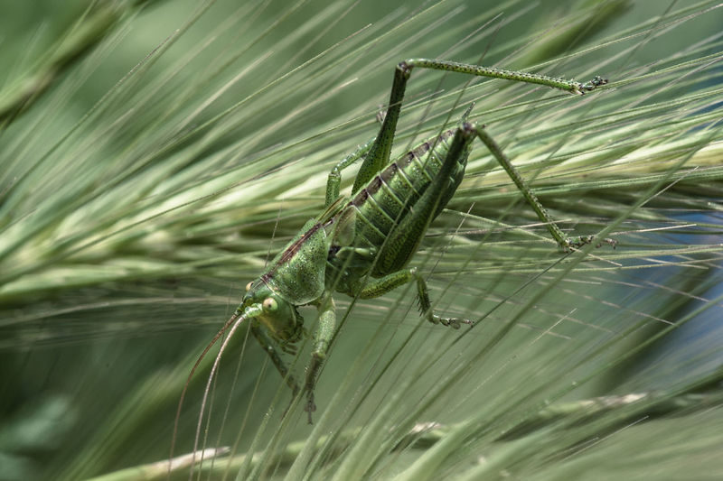 Close-up of grasshopper on plants