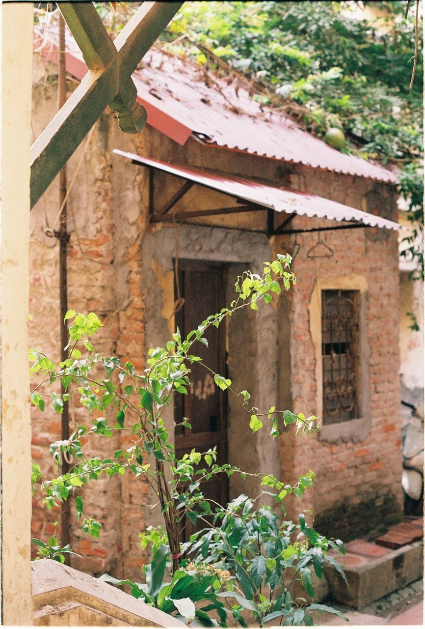 architecture, built structure, plant, building exterior, building, growth, house, day, no people, nature, outdoors, old, green color, abandoned, plant part, residential district, leaf, brick, window, wall