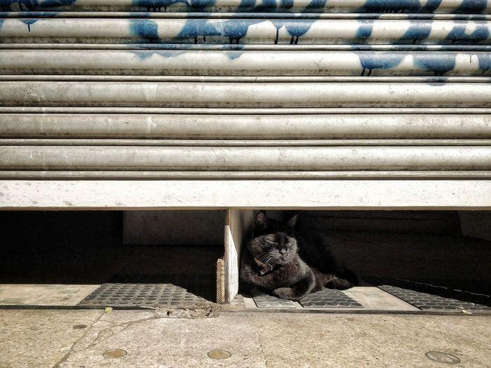 Animal Pet Sleep Sleeping Sleeping Cat Cat Corrugated Iron Shutter Close-up Closed Textured  Doorknob Door Closed Door Door Handle