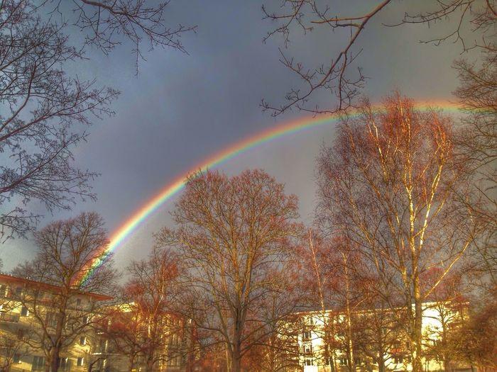 Rainbow Walking