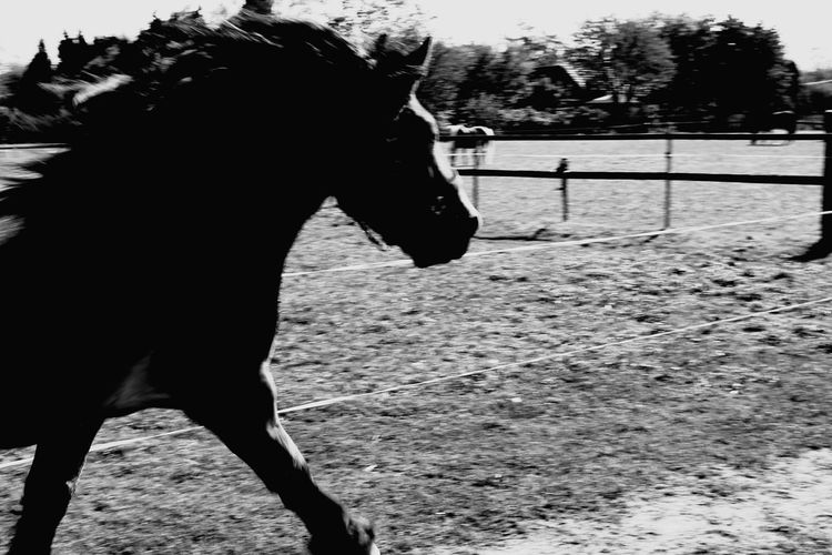 Horse Running Horse Photography  Draft Horses Renish German Coldblood Pets Horse Paddock Ranch