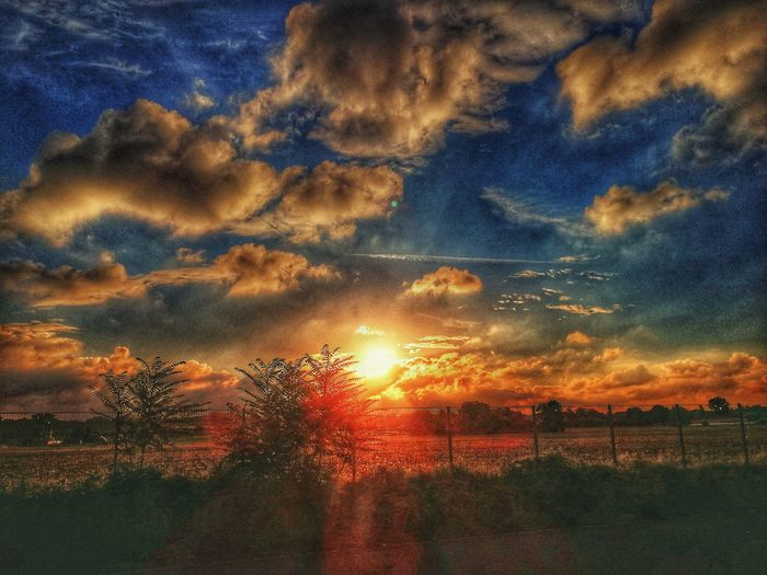 Betterlandscapes Clouds Summer EyeEm Selects Weed Tree Sunset Multi Colored Dramatic Sky Orange Color Sky Cloud - Sky Landscape Romantic Sky Sunrise Sky Only Cloudscape Cloud Calm Heaven Fluffy Shining Sun The Great Outdoors - 2018 EyeEm Awards