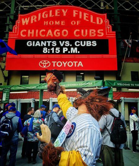 Rabid Cubs Fan Baseball Chicago Cubs