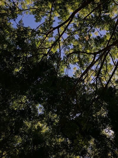 Tree Nature Low Angle View Growth Outdoors Beauty In Nature Day No People Branch Backgrounds Full Frame Forest Sky Freshness