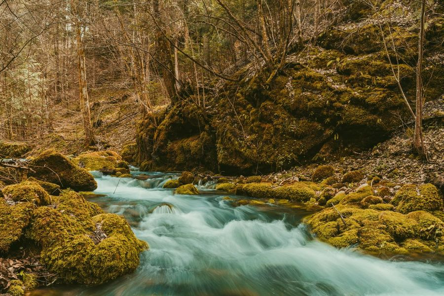 Water Tree Motion Forest Long Exposure Rugged Rock Flowing Water Waterfall Stream - Flowing Water Rushing Rock Formation Stream