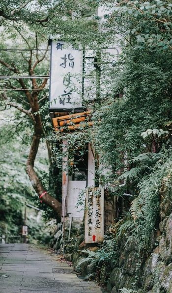 Izu style Light Lifestyles Garden Sunlight Green Color Japan Street Izu Adventures In The City Road Sign Tree Communication Guidance Text Architecture Built Structure