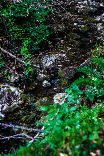water stream in forest Water Plant Nature Forest Growth No People Tree Beauty In Nature Day Downloading Tranquility Green Color Land Rock Selective Focus Solid Rock - Object Flowing Water Outdoors Flowing Stream - Flowing Water