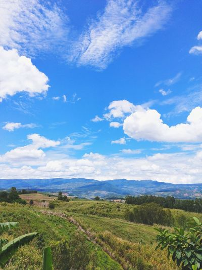 Blue sky and white cloud on the mountain in summer day. Sun Sky Blue Sky Rural Scene Water Tree Agriculture Blue Field Sea Tea Crop Crop  Sky Farm Agricultural Field Farmland Shining Valley Plantation Combine Harvester Plowed Field Irrigation Equipment Terraced Field Bale  Rice Paddy Cultivated Land Rice - Cereal Plant Vineyard The Mobile Photographer - 2019 EyeEm Awards