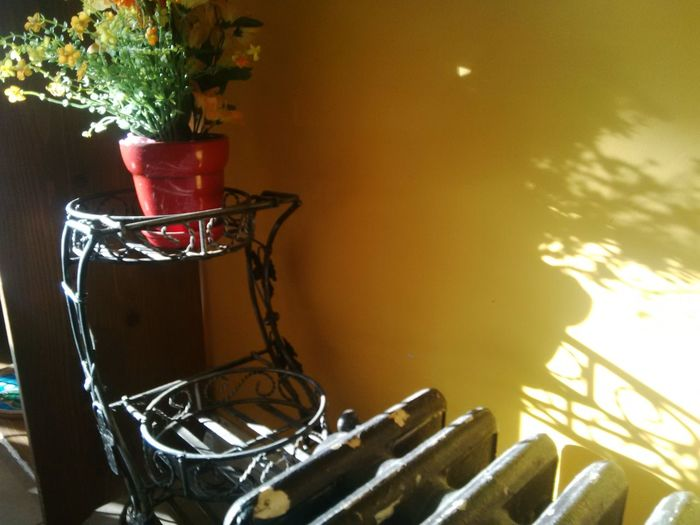 Day Indoors  Potted Plant Selena's Cafe Selenas Baker Shadow Play Sun Yellow Wall With Shadows