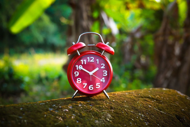 Red Alarm Clock Alarm Clock Time Clock Number Focus On Foreground Clock Face No People Accuracy Tree Red Minute Hand Close-up Wood - Material Plant Clock Hand Day Communication Single Object Outdoors Shape Hour Hand