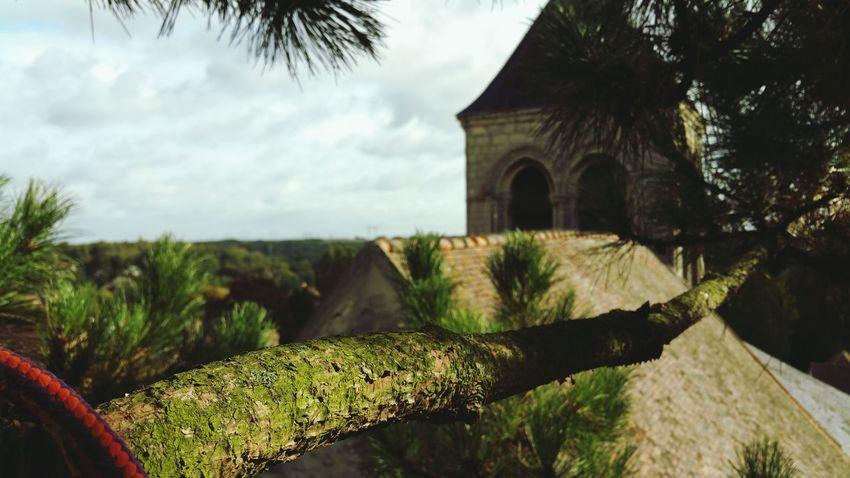 Nature Nature Photography Cordes Corde Élagage Arbre Climbing Trees Arbres Tree Pinus