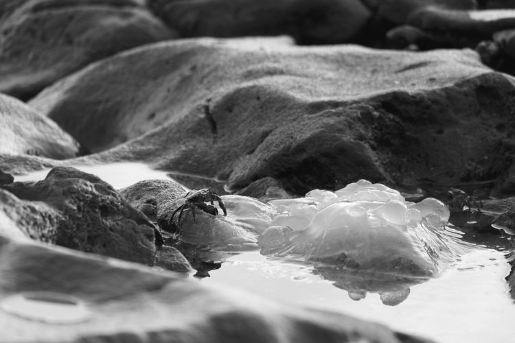 Close-up of crab on rocky shore