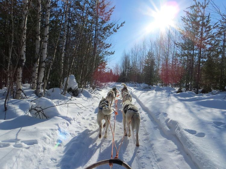 Animal Themes Beauty In Nature Cold Temperature Day Dog Domestic Animals Field Landscape Mammal Nature No People Outdoors Pets Sky Sled Sled Dog Snow Sunlight Transportation Tree White Color Winter Working Animal Sledding Sleddogs husky