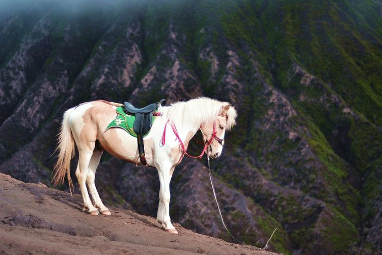 You can tracking up with this horse when you arrived at sea sand of bromo mountainMammal Horse Domestic Animals Animal Themes Landscape Outdoors Nature Full Length Beauty In Nature No People Day Tree Mountain Bromo Bromo Mountain Indonesia Bromo, East Java Bromo, Indonesia Live For The Story