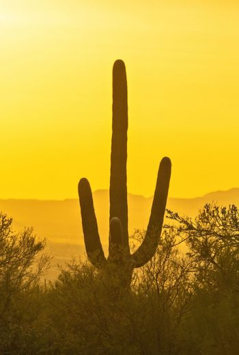 Silhouette cactus on field against sky during sunset