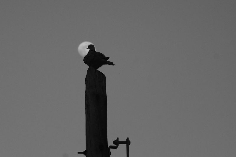 Bird Outdoors No People Moon Sky Perching Day Fujifilm Vacations Backgrounds Bokeh First Eyeem Photo EyeEmNewHere Scenics Tranquility Beauty In Nature Nature Monochrome Blackandwhite B&w Photography