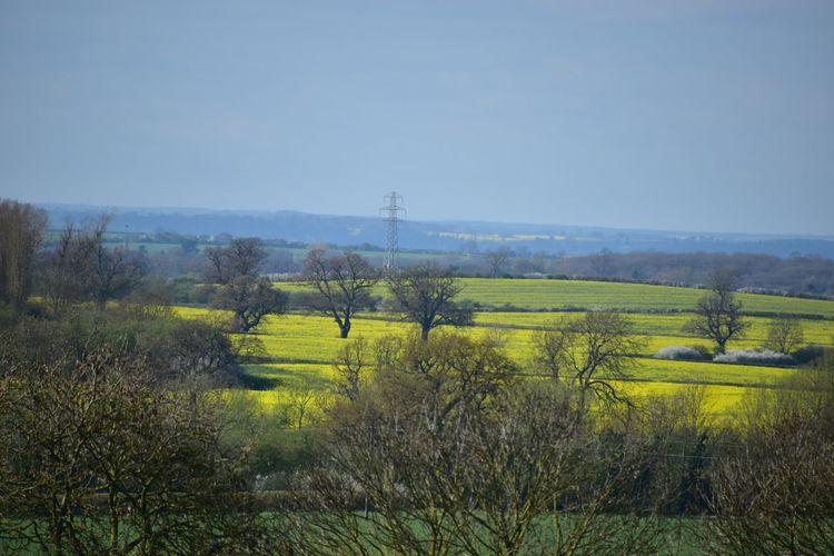 Taking Photos Fields Trees Contrast Harlaxton Nikon D5500