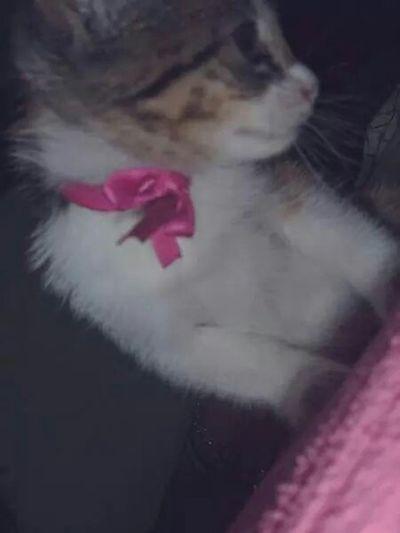 Cat♡ Likealways Ilikecats Meow🐱 Meow Likeback Follow Me Like4like Follow4follow