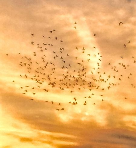 Ducks leaving the scene Chuylui Photography Ducks Flying Around The Farm 2016 Sunsets Farmer's Life
