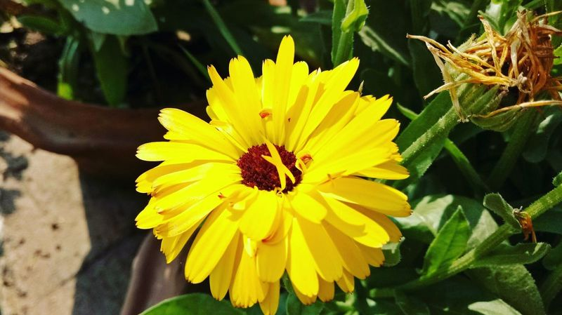 Flower Fragnance Freshness Focus On Foreground Yellow Nature Closeup Life