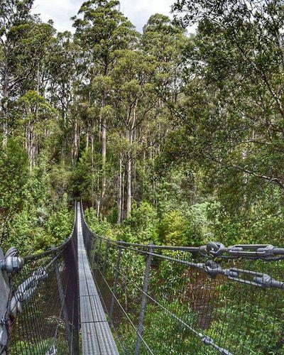 Tahuneairwalk Swingingbridge Forest Huonriver River Igeraustralia Igertasmania Tasmania Visittasmania Iglobal_photographers