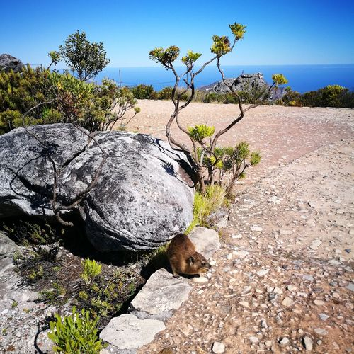 Cape Town, South Africa Tabel Mountain Mountain Dassie Nature Nature Photography Tree Sunlight Sand Sky Landscape