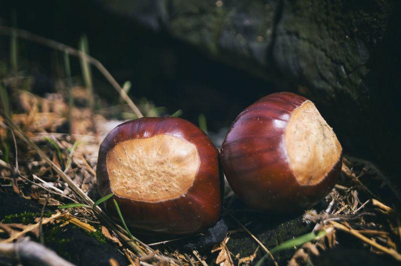 Close-up of hazelnuts on rocks