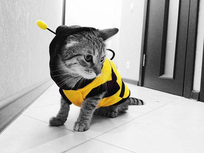 Cat My Cat My Cat Is Cooler Than Your Kids! Beeline Cats Catsagram Catoftheday My Cat Mirana is a Bee Blackandwhite