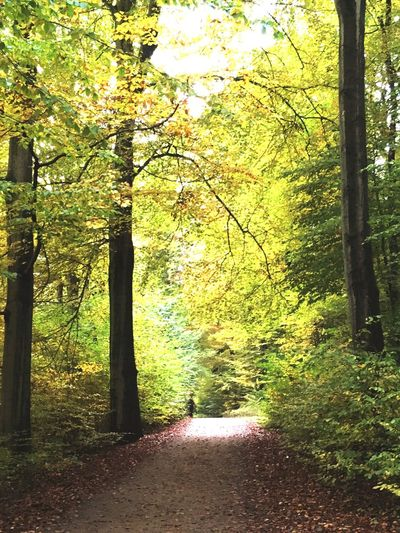 Autumn Colours Germany Hamburg Forest Nature Green Color Sunlight